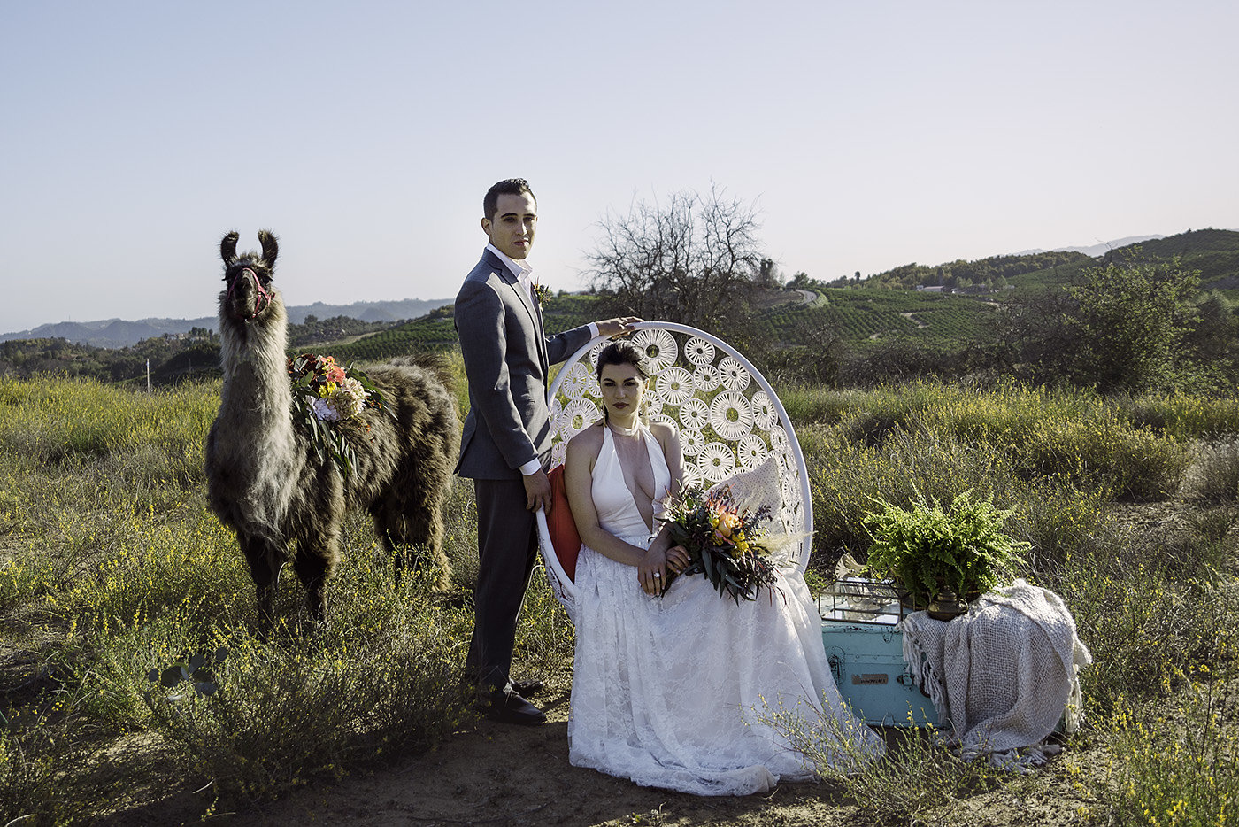 Why You Need a LLama at Your Wedding...
